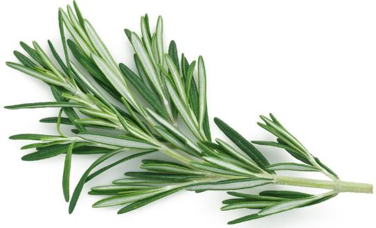 Romarin, une herbe aromatique